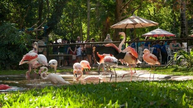 , Conheça o Parque das Aves em Foz do Iguaçu, toda sua história e suas atrações., Passeios em Foz do Iguaçu | Combos em Foz com desconto, Passeios em Foz do Iguaçu | Combos em Foz com desconto