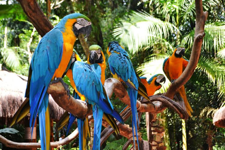 10 motivos para incluir Foz do Iguaçu na sua próxima viagem