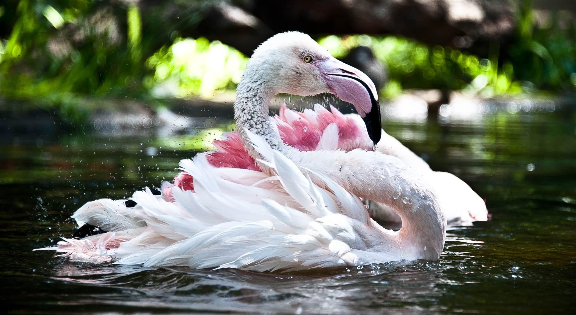 , Parque das Aves dá as boas-vindas aos primeiros filhotes de flamingos, Passeios em Foz do Iguaçu | Combos em Foz com desconto