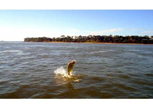 Pescaria na Argentina, Pescaria na Argentina – Por que atrai tanto os pescadores?, Passeios em Foz do Iguaçu | Combos em Foz com desconto, Passeios em Foz do Iguaçu | Combos em Foz com desconto