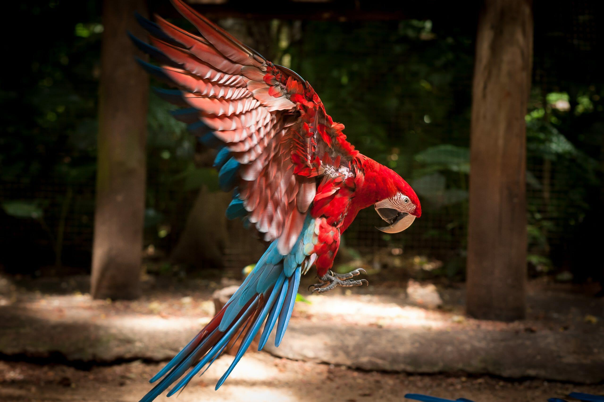 Você já conhece os passeios que o Parque das Aves oferece?