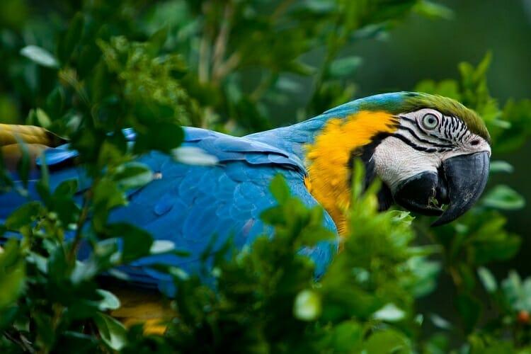Parque das Aves, 10 curiosidades incríveis sobre o Parque das Aves, Passeios em Foz do Iguaçu | Combos em Foz com desconto