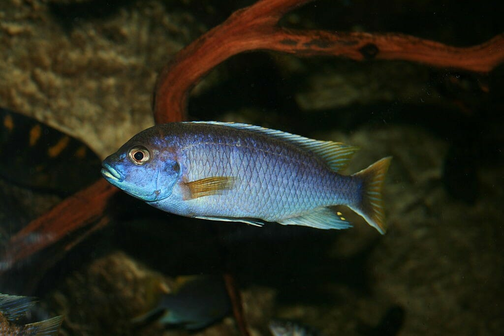 , Espécie de peixe consegue diferenciar os rostos de amigos e de predadores, Passeios em Foz do Iguaçu | Combos em Foz com desconto