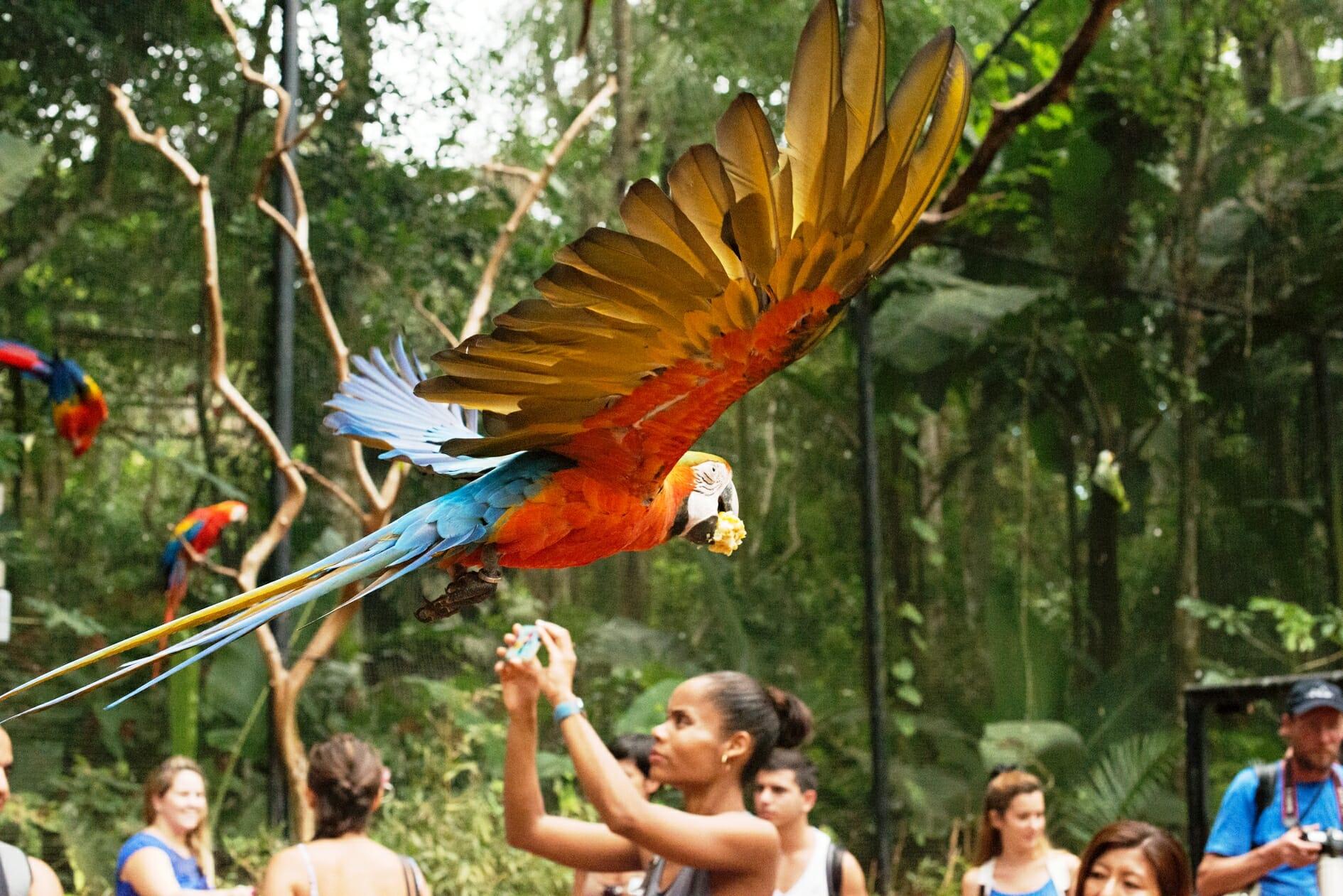 , Parque das Aves em Foz do Iguaçu, uma das mais incríveis atrações da tríplice fronteira, Passeios em Foz do Iguaçu | Combos em Foz com desconto, Passeios em Foz do Iguaçu | Combos em Foz com desconto