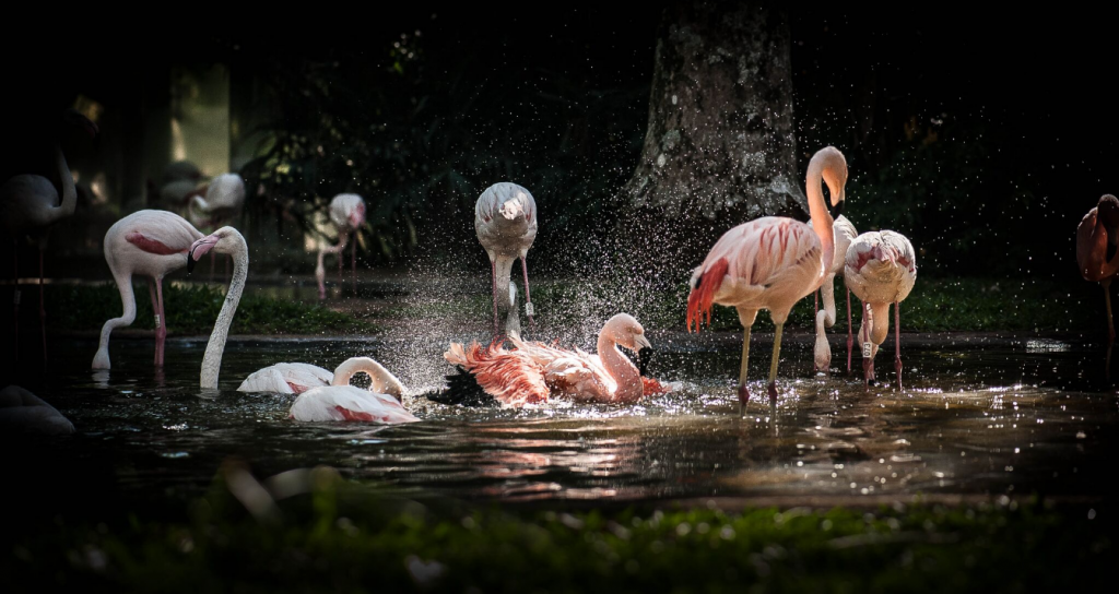 , Parque das Aves em Foz do Iguaçu, uma das mais incríveis atrações da tríplice fronteira, Passeios em Foz do Iguaçu | Combos em Foz com desconto