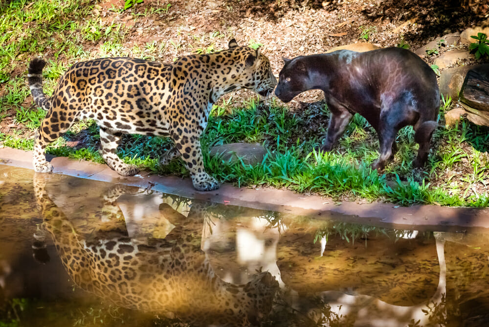 , Refúgio Biológico Bela Vista, Unidade de Proteção Ambiental da Itaipu Binacional, Passeios em Foz do Iguaçu | Combos em Foz com desconto, Passeios em Foz do Iguaçu | Combos em Foz com desconto