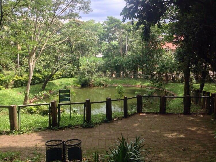 Confira 07 dicas de passeios gratuitos em Foz do Iguaçu. Image