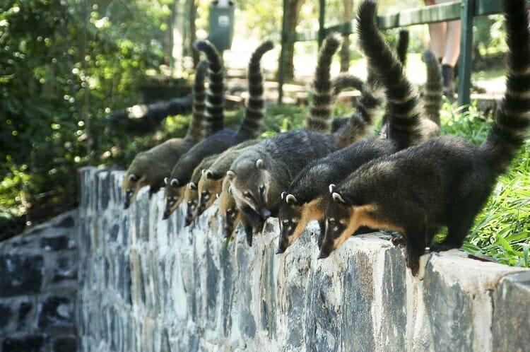 , O que levar na mala para visitar as Cataratas da Argentina e do Brasil., Passeios em Foz do Iguaçu | Combos em Foz com desconto, Passeios em Foz do Iguaçu | Combos em Foz com desconto