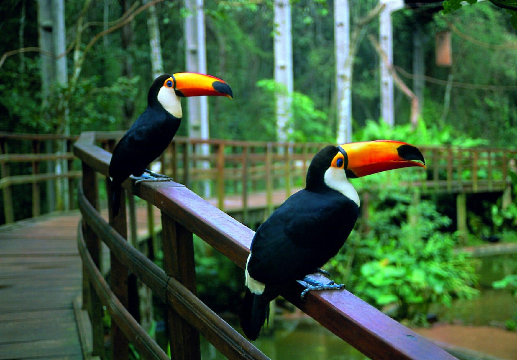 Novidade: Parque das Aves inaugura mais um atrativo tucano