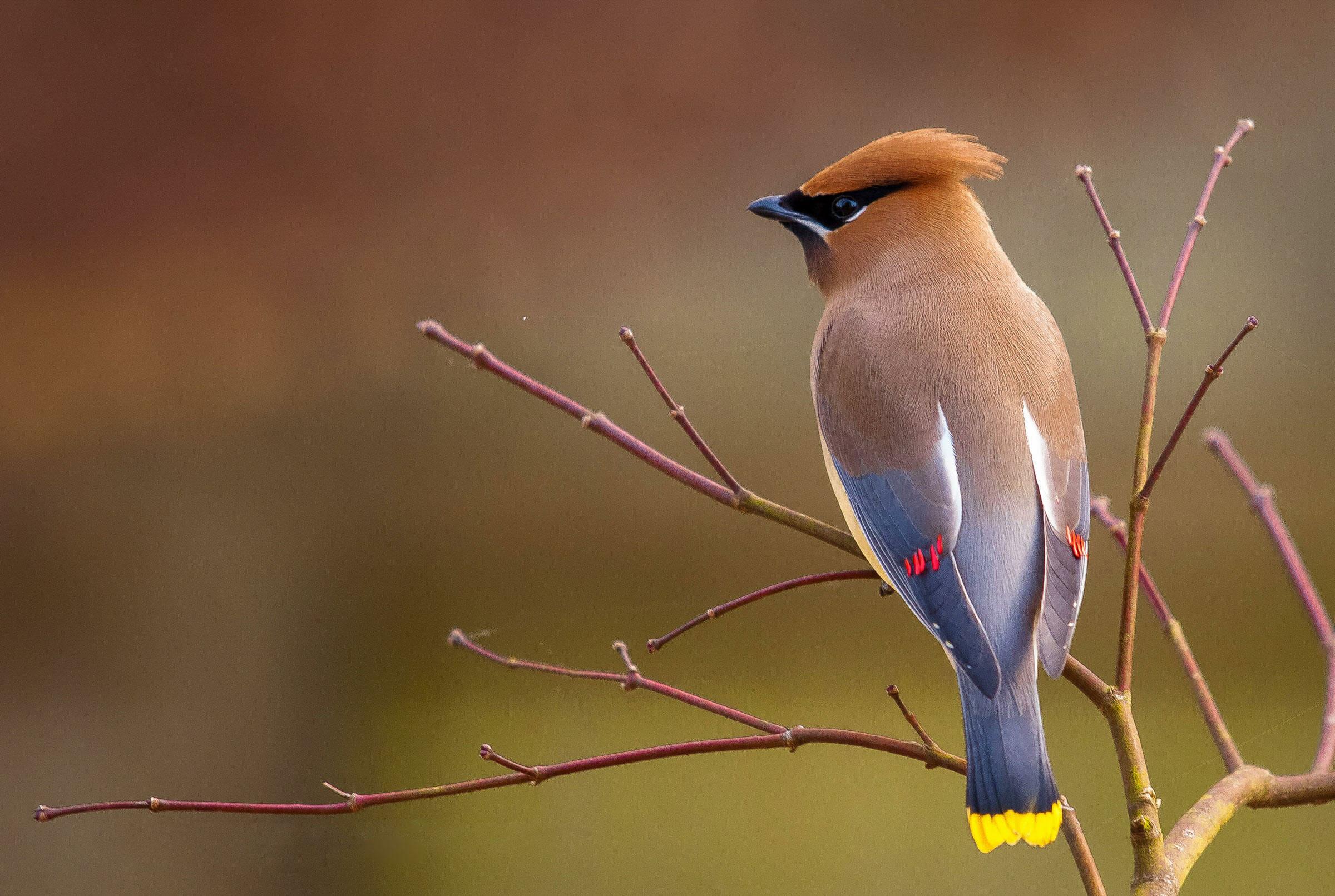 Novidade: Parque das Aves inaugura mais um atrativo ave