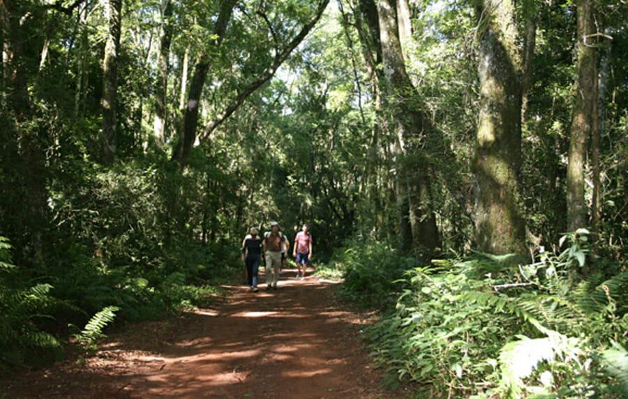 Venha conhecer todos os passeios do Parque Nacional do Iguaçu! trilha das bananeiras