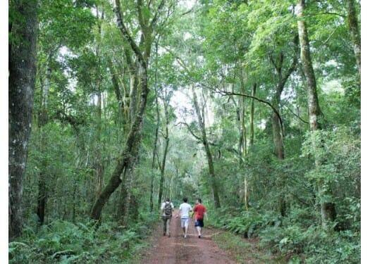 , Trilha das Bananeiras – Uma aventura ecológica pelas cataratas, Passeios em Foz do Iguaçu | Combos em Foz com desconto