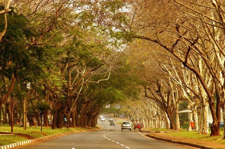 05 Dicas de passeios gratuitos em Foz do Iguacu para incluir no seu roteiro de viagem!
