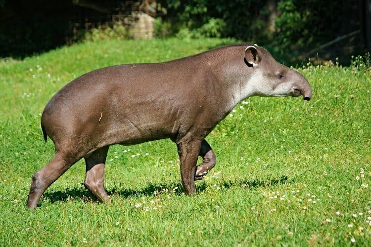 animais de foz do iguaçu, Guia da Tríplice Fronteira: Os animais de Foz do Iguaçu!, Passeios em Foz do Iguaçu | Combos em Foz com desconto