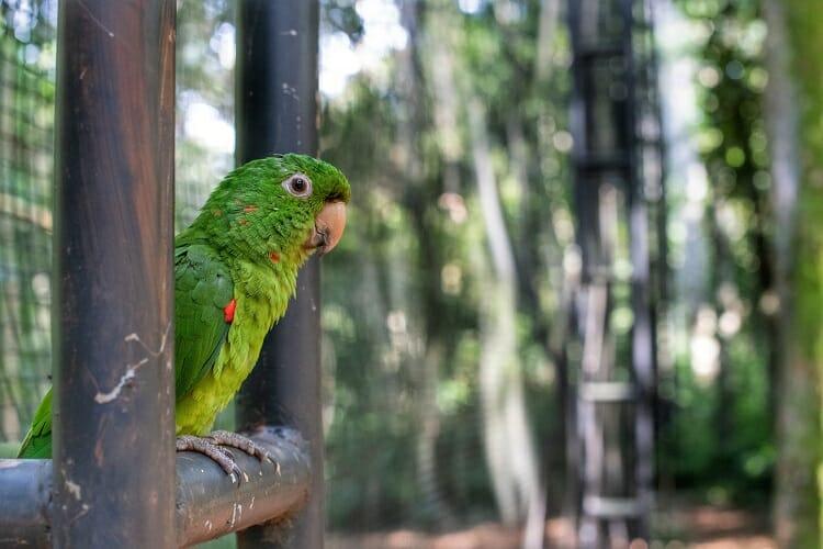 Parque das Aves, Parque das Aves deu um novo lar para 300 periquitos salvos do contrabando!, Passeios em Foz do Iguaçu | Combos em Foz com desconto