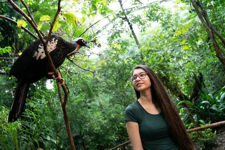 Parque das Aves - Pontos turísticos em Foz do Iguaçu