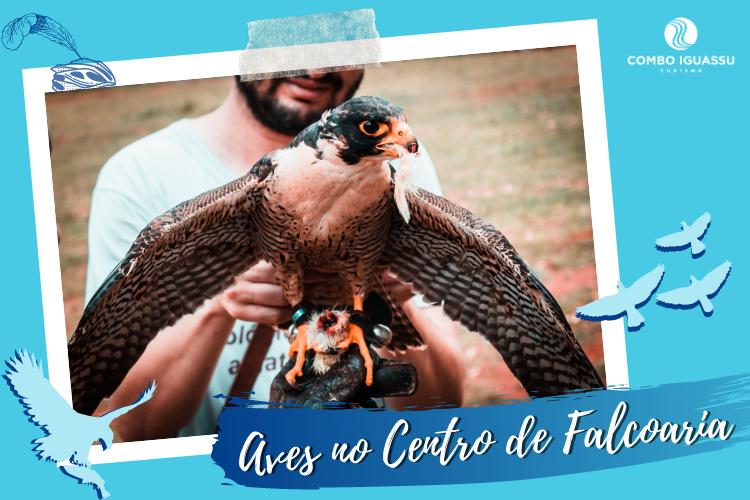 Centro de Falcoaria  - Falcão comendo