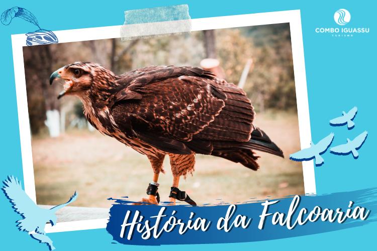 História da Falcoaria - Gavião (Centro de Falcoaria)