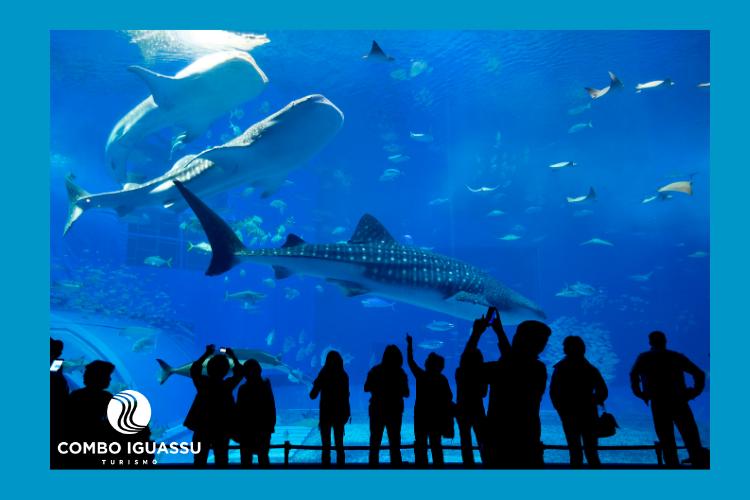 Pessoas observando um aquário, ilustração do AquaFoz Grupo Cataratas.