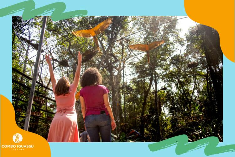 Um dos melhores passeios inclusos em um dos pacotes Foz do Iguaçu, no Parque das Aves.