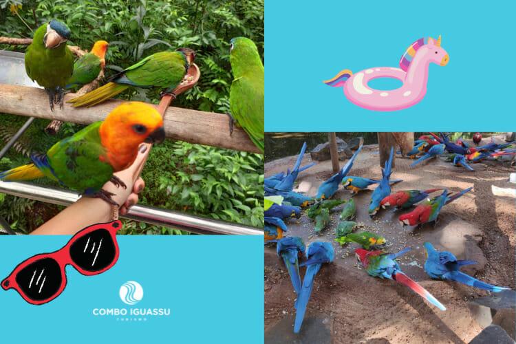 Aves presentes no Parque das Aves, natureza é encantadora. Se hospede em um dos hotéis em Foz do Iguaçu e conheça este passeio.
