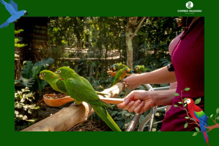 Pessoa alimentando os pássaros super fofos no Parque das Aves Foz do Iguaçu.