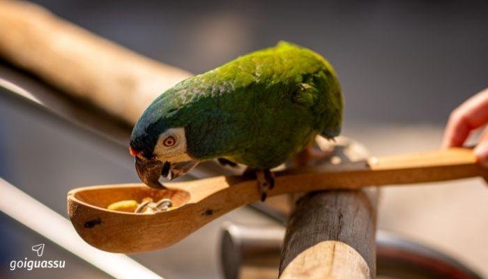 Foz do Iguaçu com a Família parque das aves